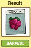 Greenhouse06