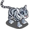 Maltese_tiger