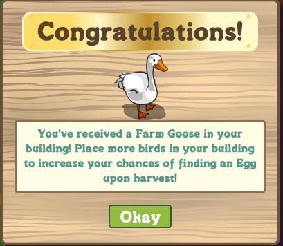 Aviary_image (congratulations)