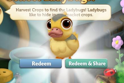 Ladybug 5