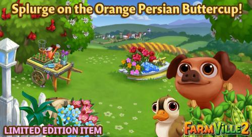 Splurge on the Orange Persian Buttercup LE - FarmVille 2