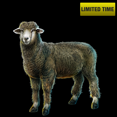 Mw_item_corriedalesheep_400_black_bg