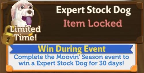 Moovin Expert Stock dog