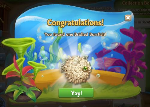 Pufferfish 13